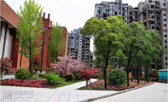 小学校园景观绿化设计项目